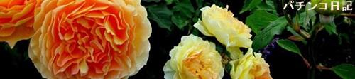 AKB薔薇